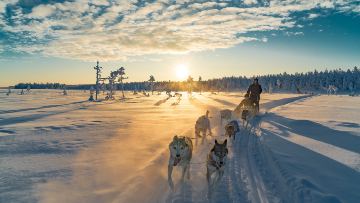 picture Husky Safari Lapland Travel Äkäslompolo